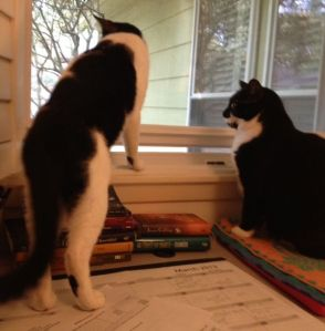 Cats at studio window
