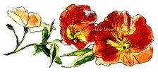 Flower Spot w CopyRight