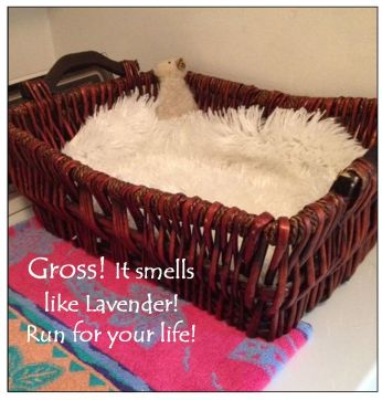 Cat basket smells like lavender 4-28-15