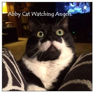 Abby Cat Watching Angels 7-14-15