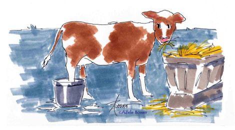 Cow & Bucket 8-11-15