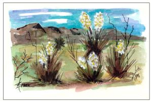 16-West Texas Yucca for FB