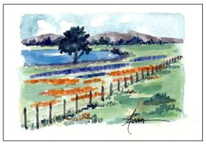 18-Bluebonnets and Indian Paintbrushes for FB