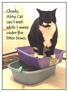 Abby Cat can't wait 11-7-15
