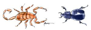 The Scorpion and the Beetle 12-16-15